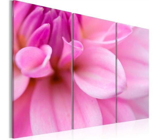 Tableau Dahlia Rose 60 X 40 Cm