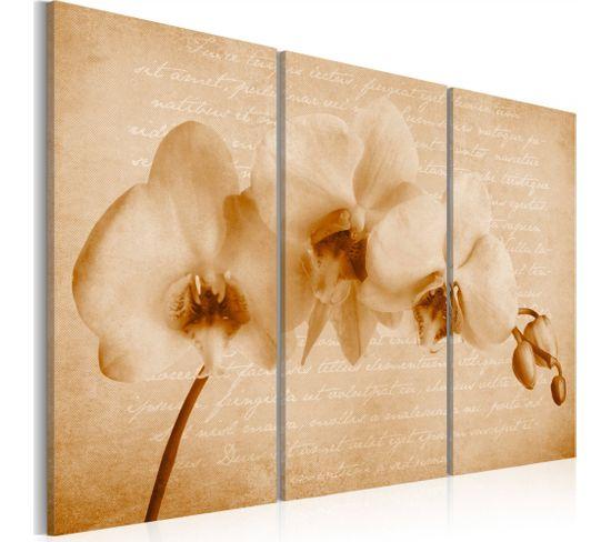 Tableau Orchidee Vintage 60 X 40 Cm