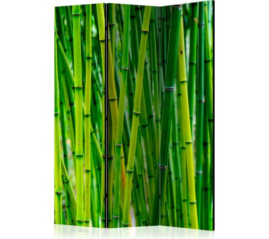 Paravent 3 Volets Bamboo Forest